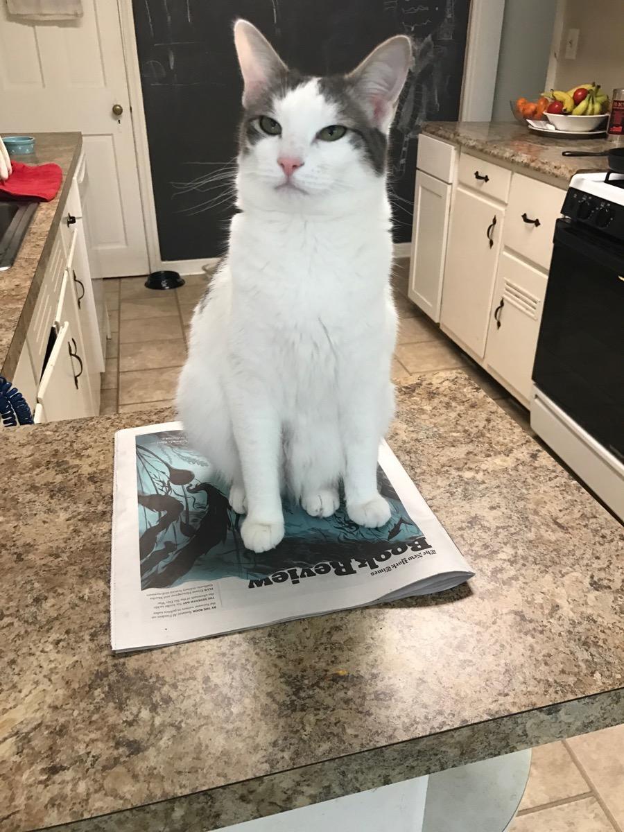 grumpy cat elle book review