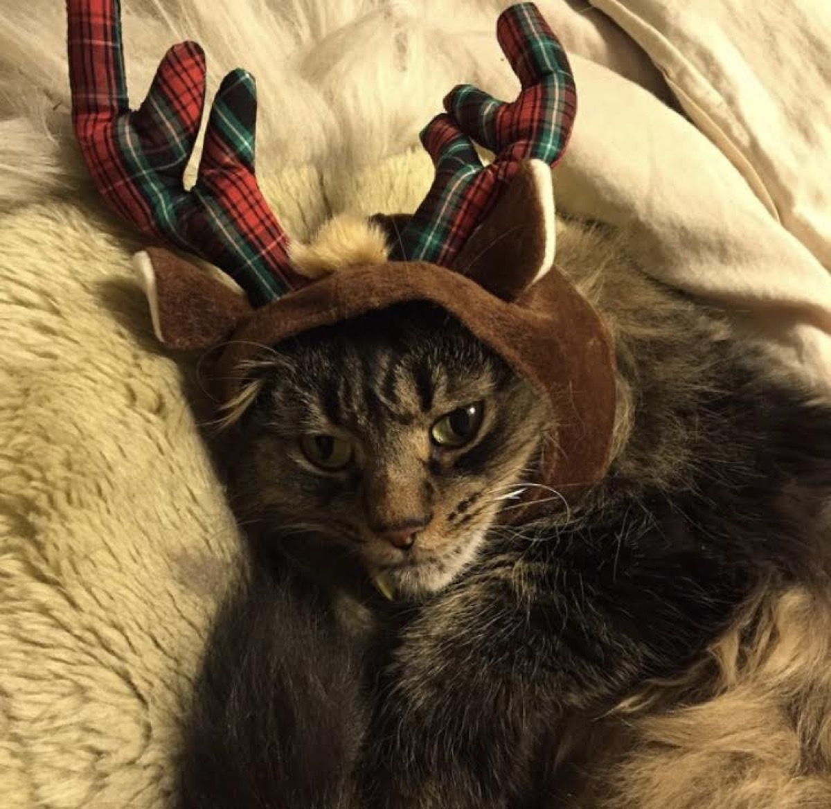 grumpy cat penny