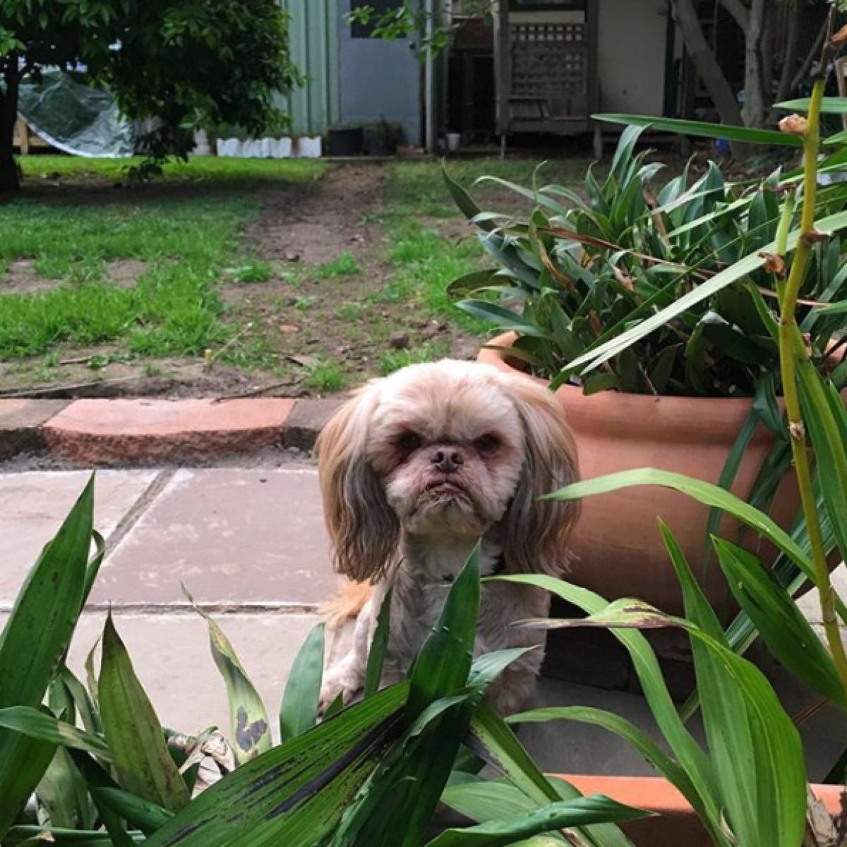 grumpy dog in the yard