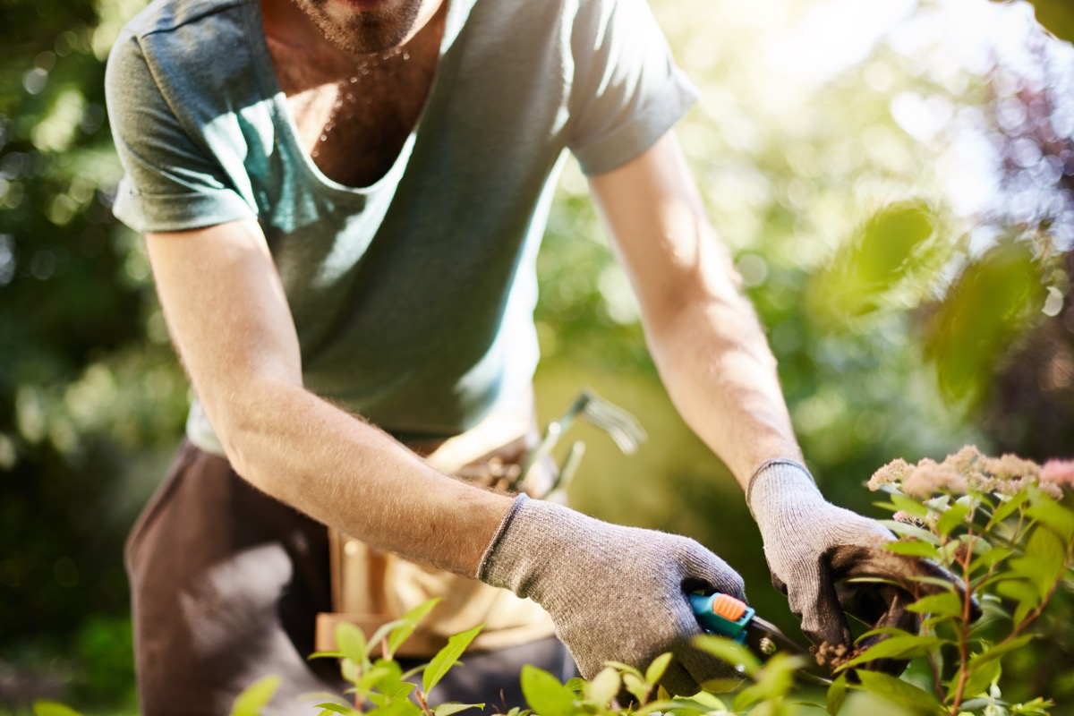 man trimming plants in a garden help the earth