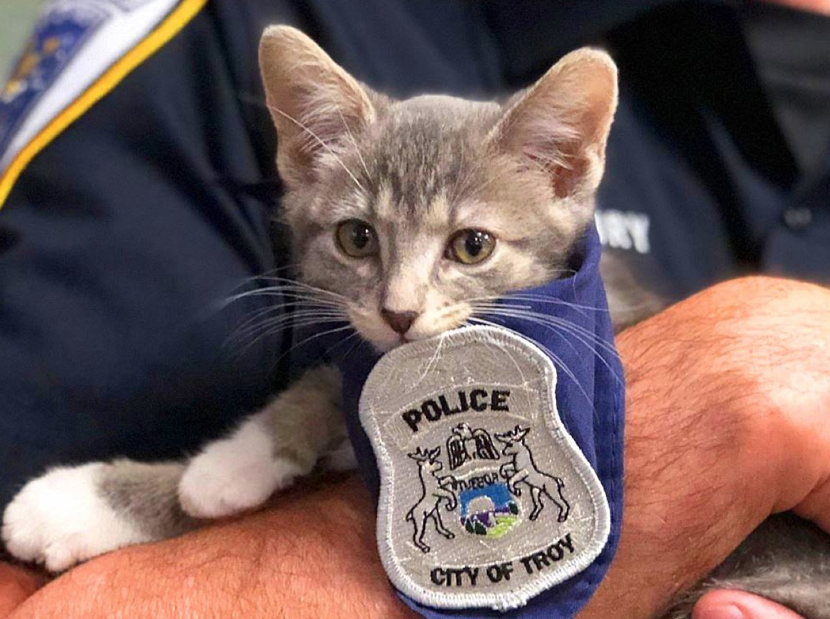 Pawfficer Donuts adorable police animals