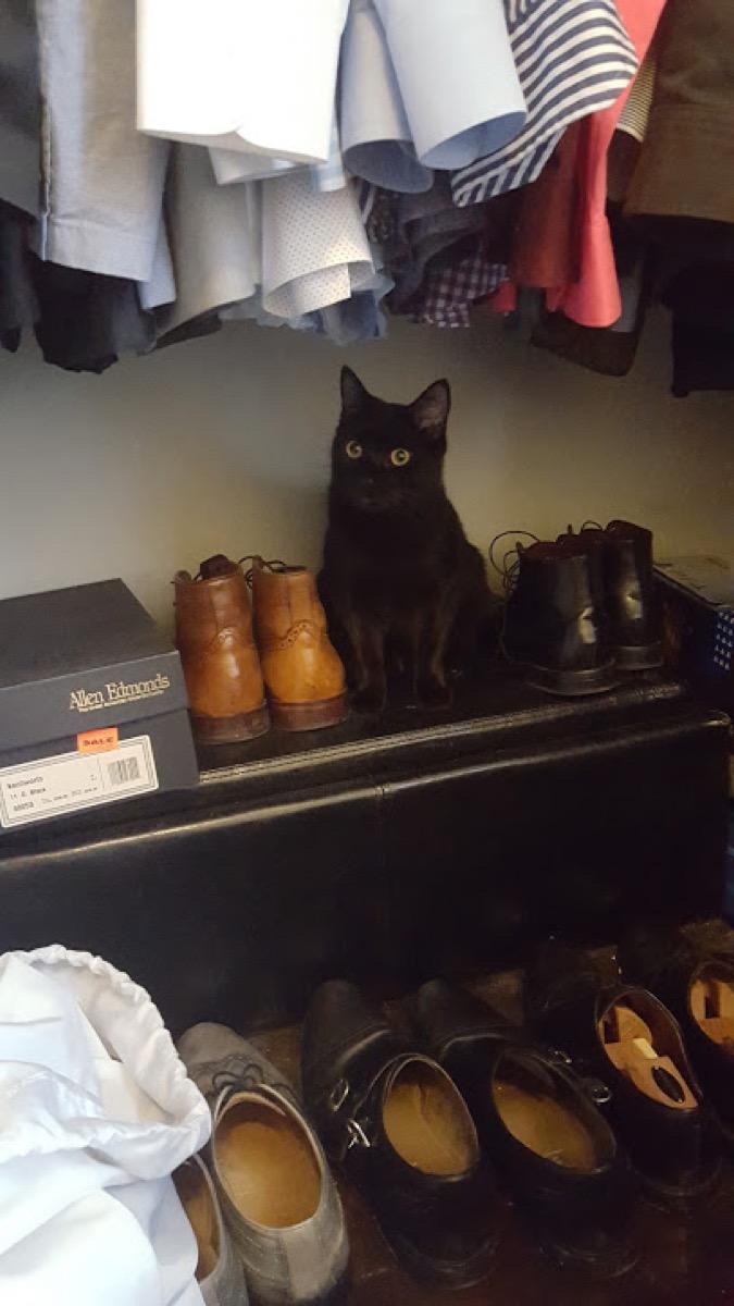 Puck in the Closet {Pet Adoption Stories}