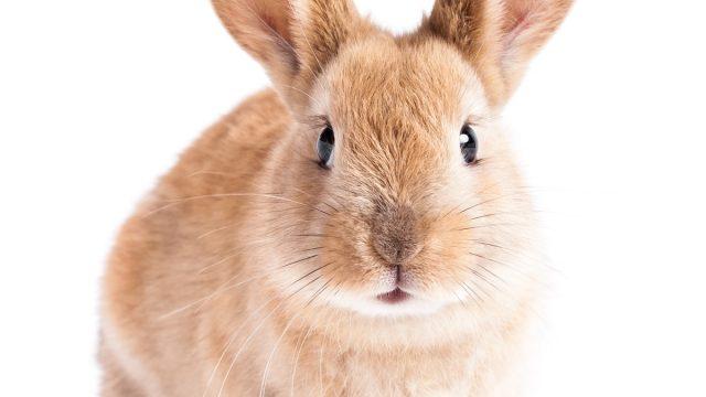 rabbit bunny for easter - best easter games