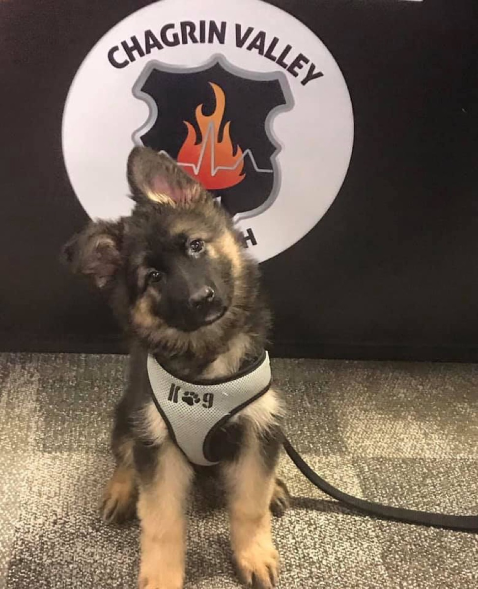 Revan Puppy Cleveland adorable police animals