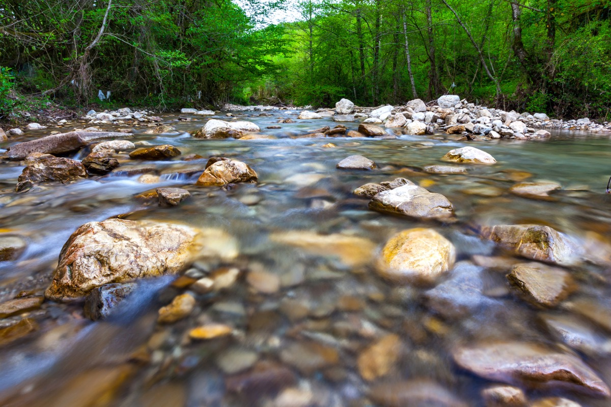 Transparent cold water of a mountain river flows between picturesque summer stones against a background of green trees close up. (Transparent cold water of a mountain river flows between picturesque summer stones against a background of green trees cl