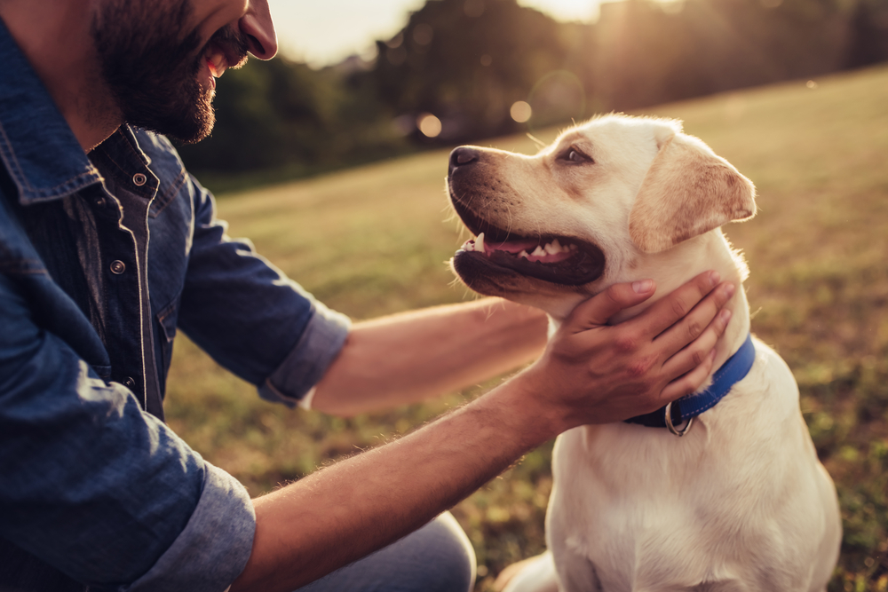 happy dog with owner, did you know facts