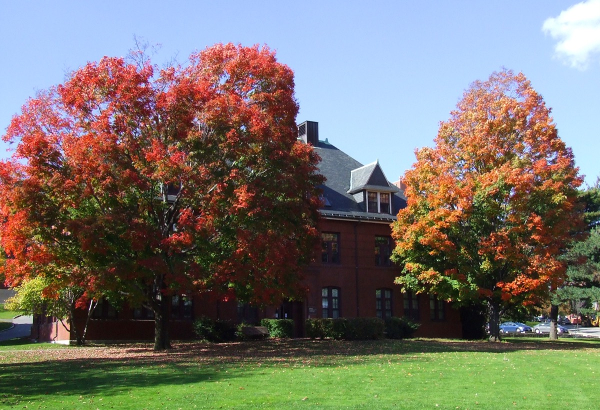 Autumn Colors at Tufts University - Image
