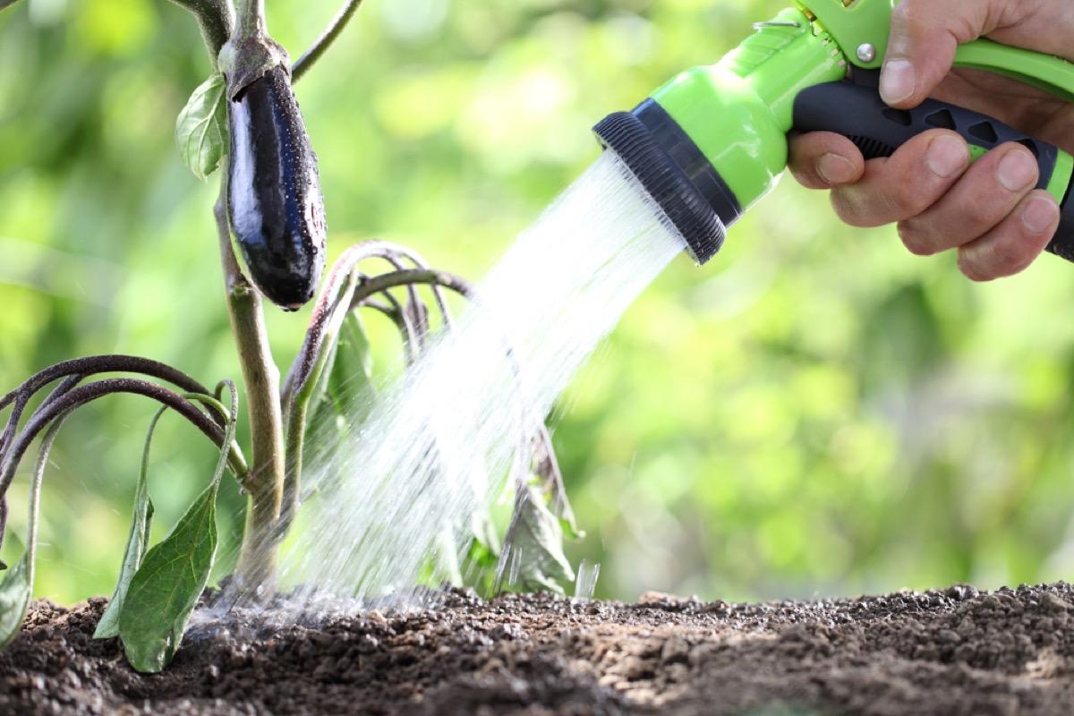 destroying your garden