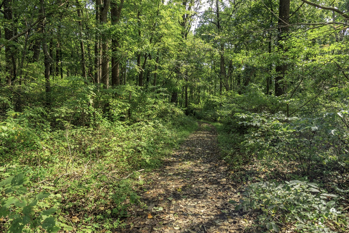 Walking along a Path through the Forest within a public park in eastern Pennsylvania