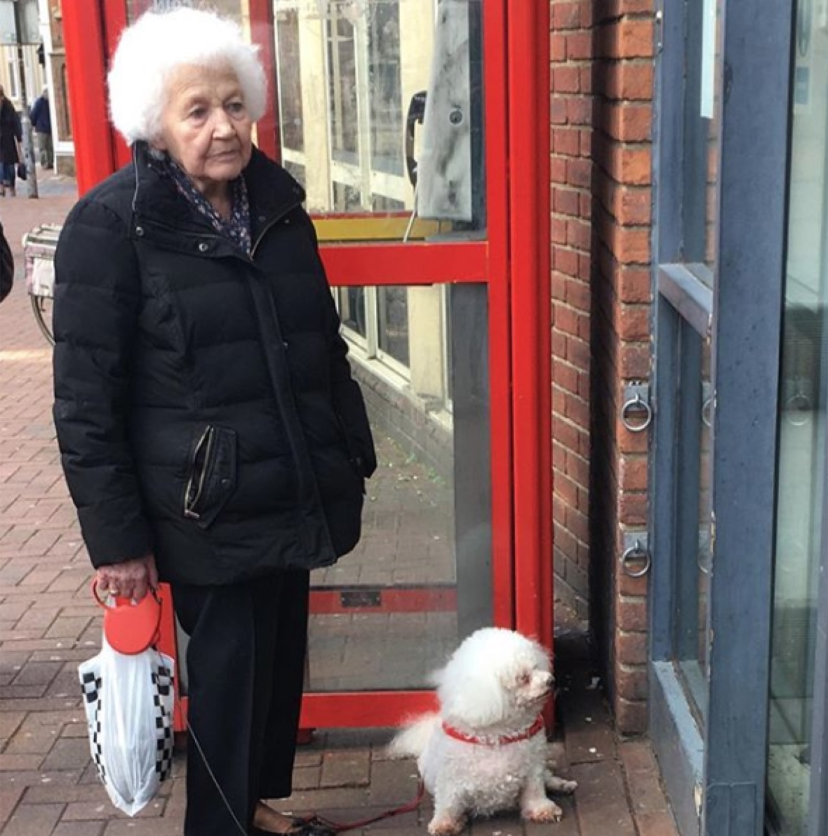 old woman with curly white hair matches fluffy dog, dog and owner twins