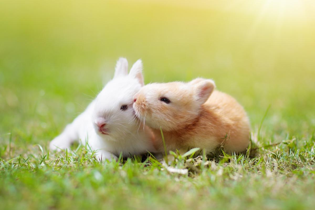 baby rabbits in love animals in love