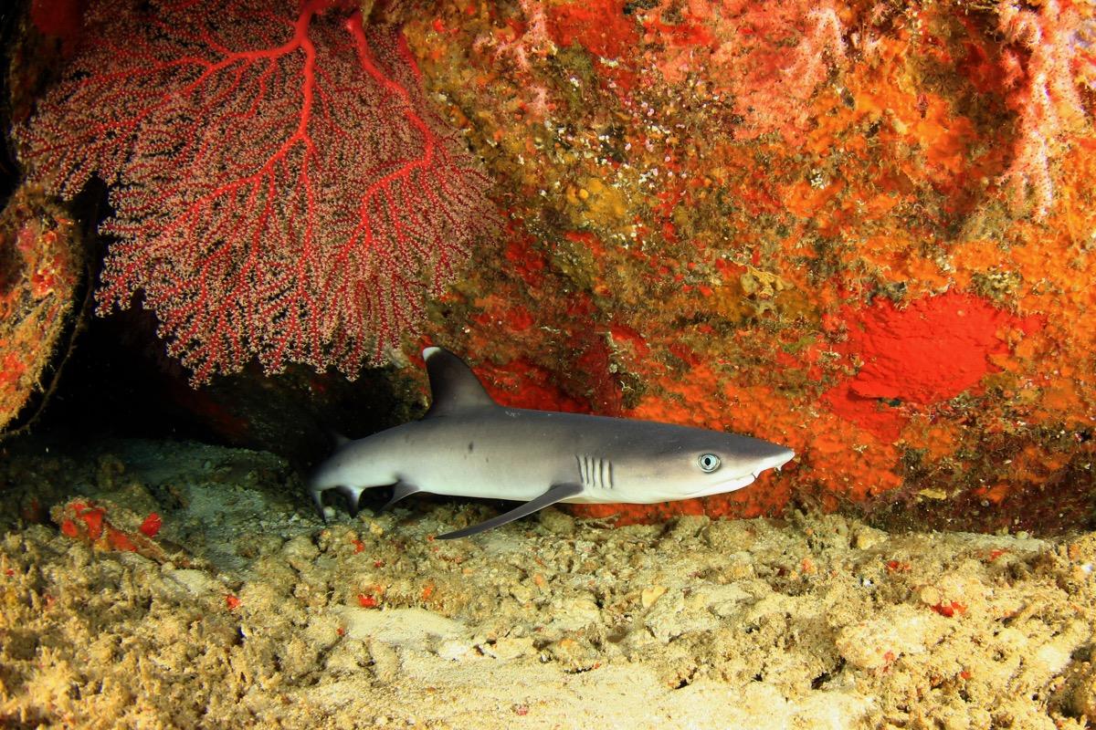 baby shark in water, dangerous baby animals