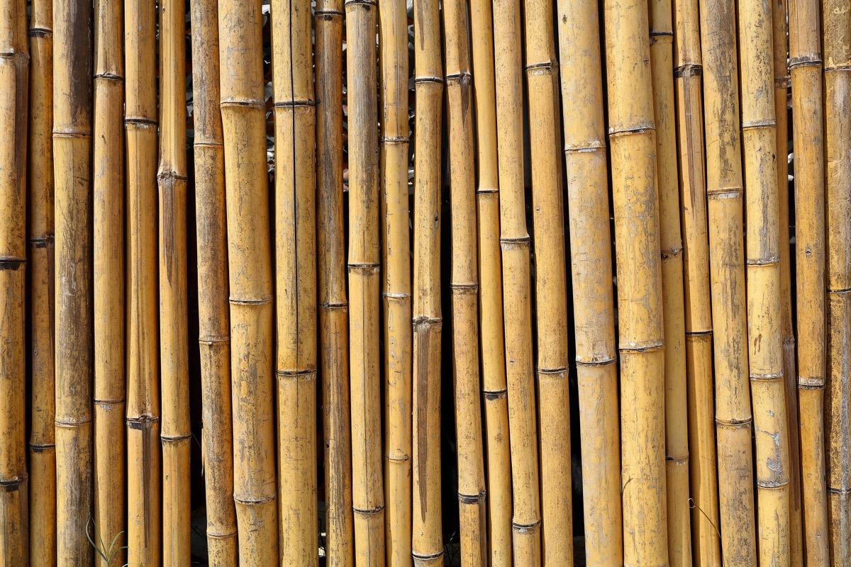 bamboo wall, useless facts