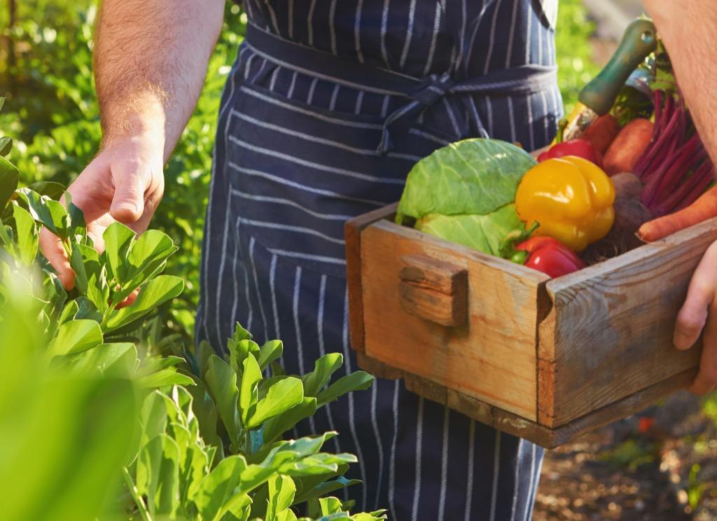 Bin of Organic Produce
