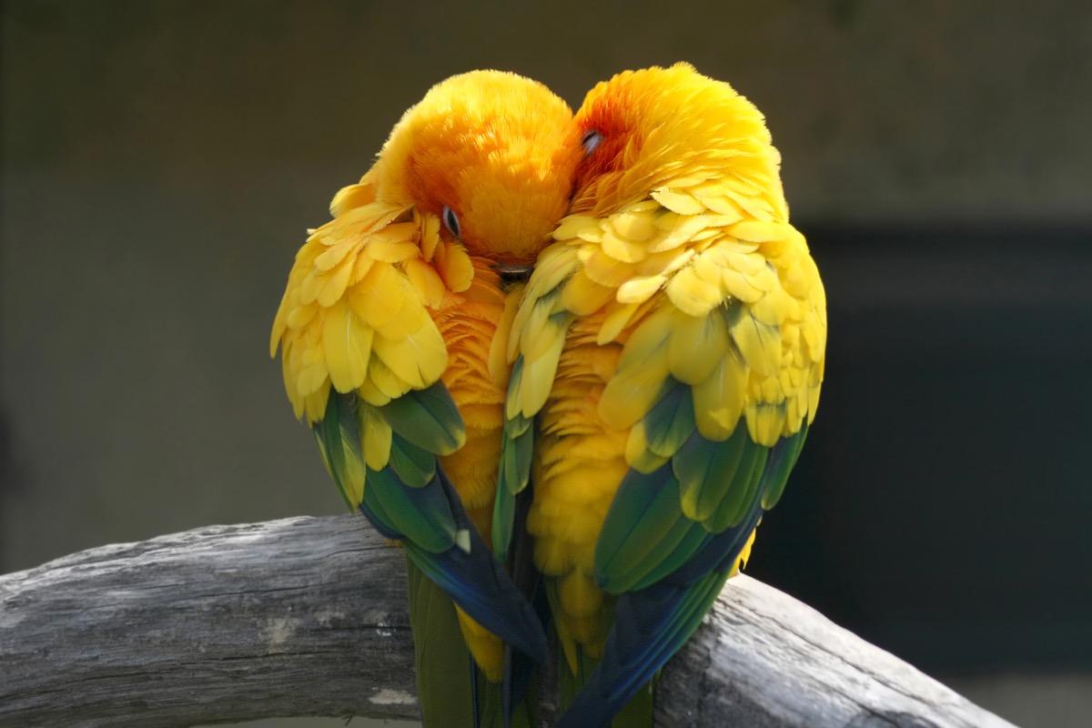 birds in love pets in love