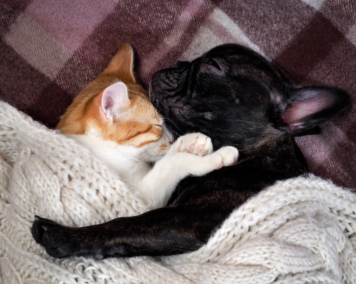 cat and dog cuddling animals in love