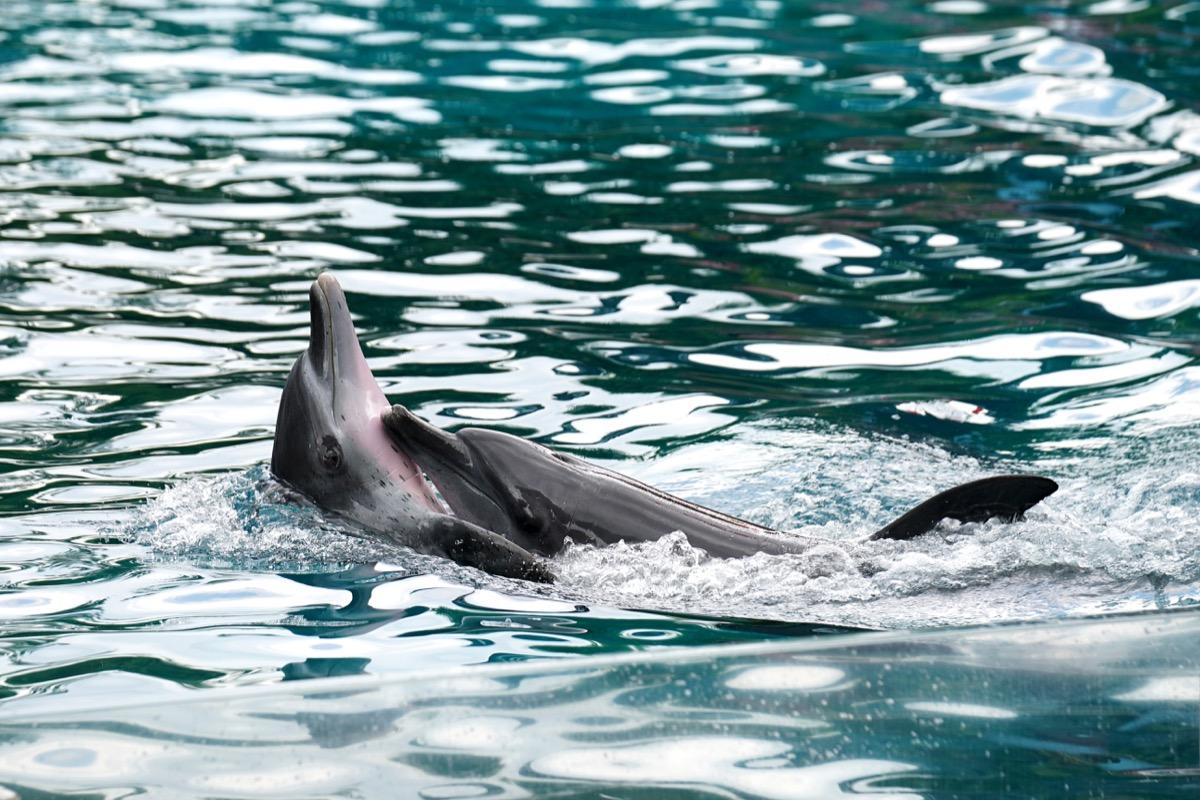 Dolphins Giving Each Other a Hug Dolphin Photos