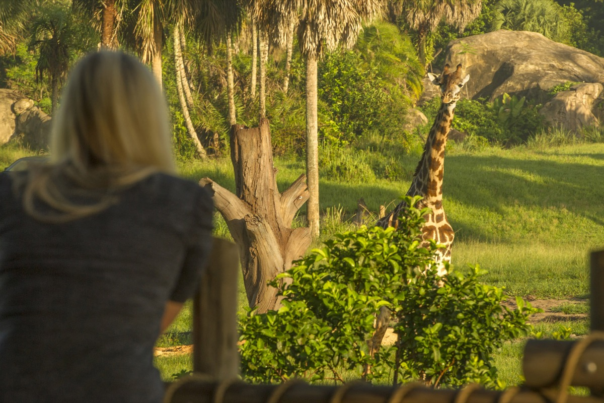 Guests look out over a wildlife-filled savanna on Wild Africa Trek, where adventure comes alive in an exciting experience at Disney's Animal Kingdom. The add-on offering invites intrepid explorers to up-close encounters with the park's wildlife. As part of their expert-led adventure, guests take safari vehicles to a serene overlook where they can savor Africa-inspired food and beverage while observing giraffes, elephants, gazelle and more. Disney's Animal Kingdom is part of Walt Disney World Resort in Lake Buena Vista, Fla.