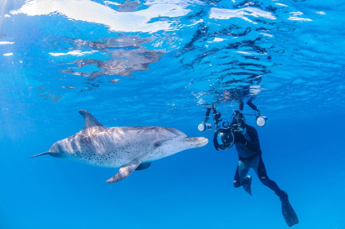 A Diver Taking a Photo of a Dolphin Dolphin Photos
