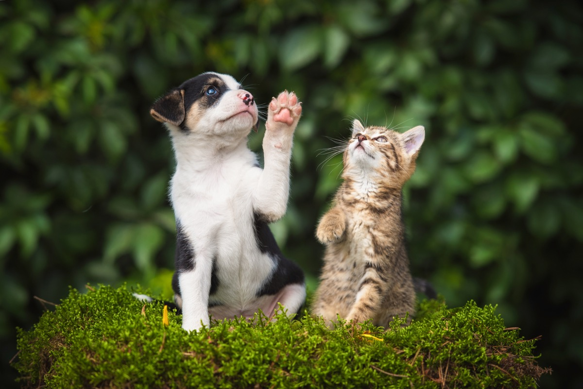 a dog and cat looking up at the sky