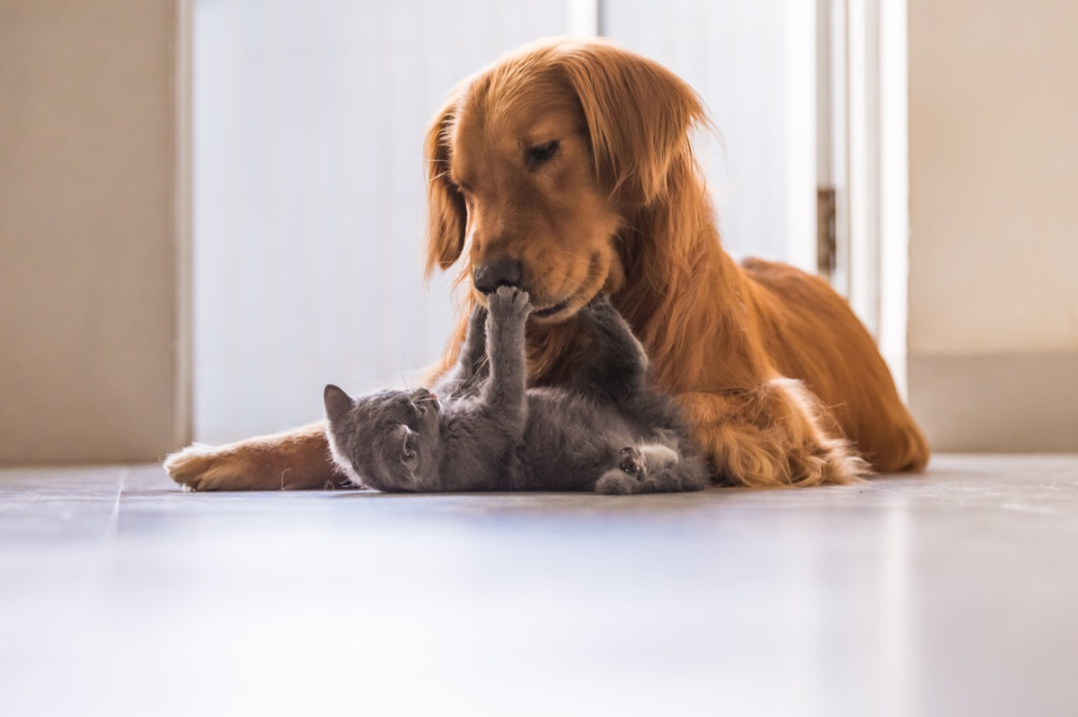 dog and cat playing