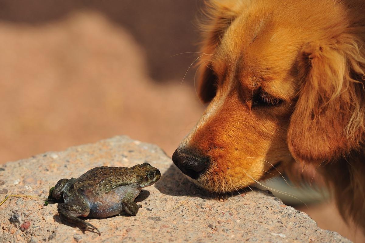 dog staring at frog