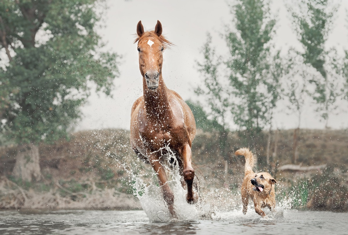 dog and a horse running in the water together