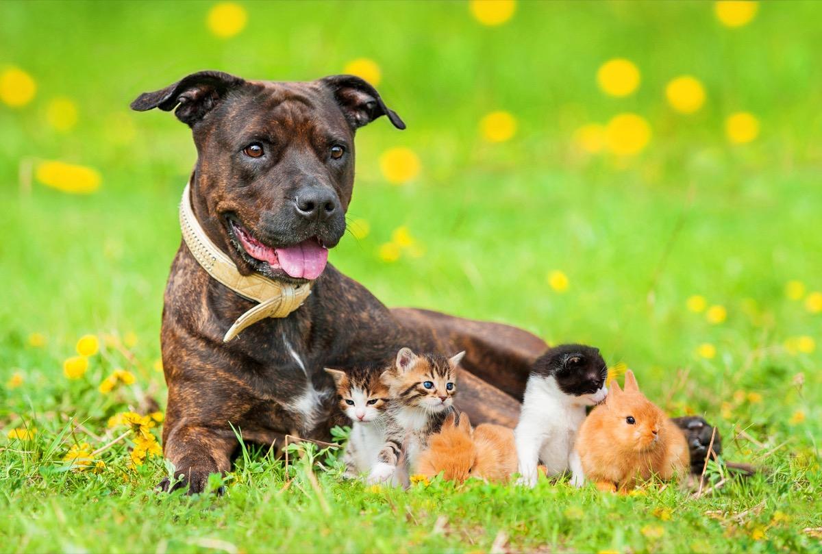 dog and little friends in a field