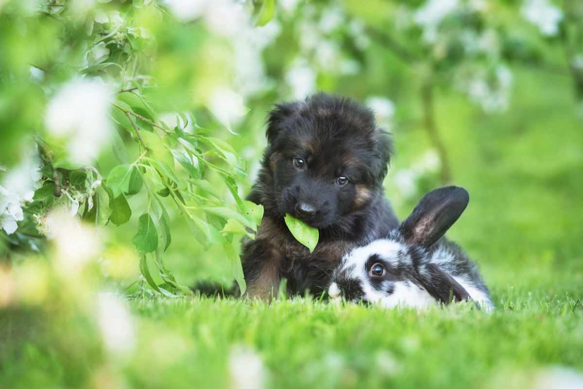 dog and rabbit in the grass together