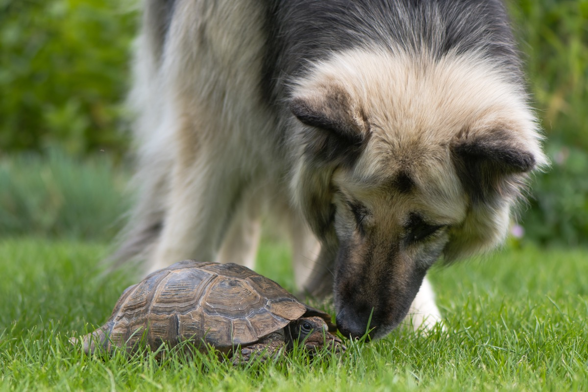 dog and tortoise together in the grass