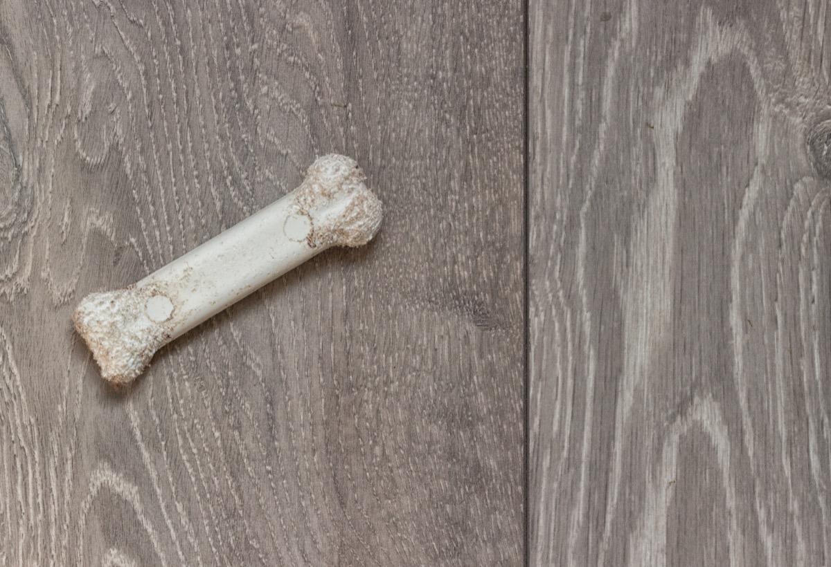 dog bone on the floor, useless facts