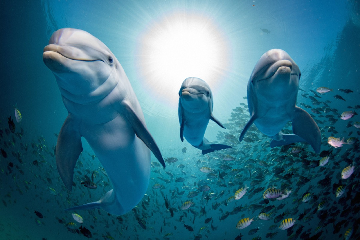 dolphins swimming through school of fish amazing dolphin photos