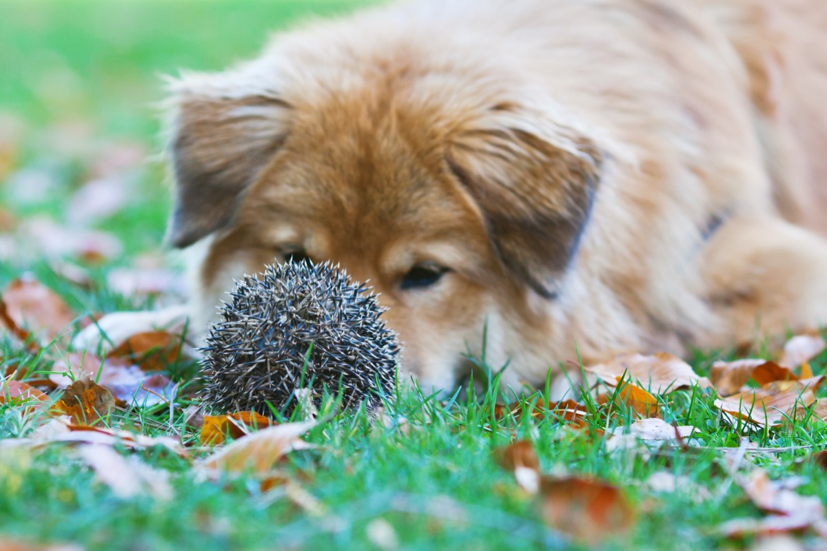 dog and hedgehog just hanging out