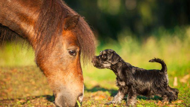 horse looking at dog