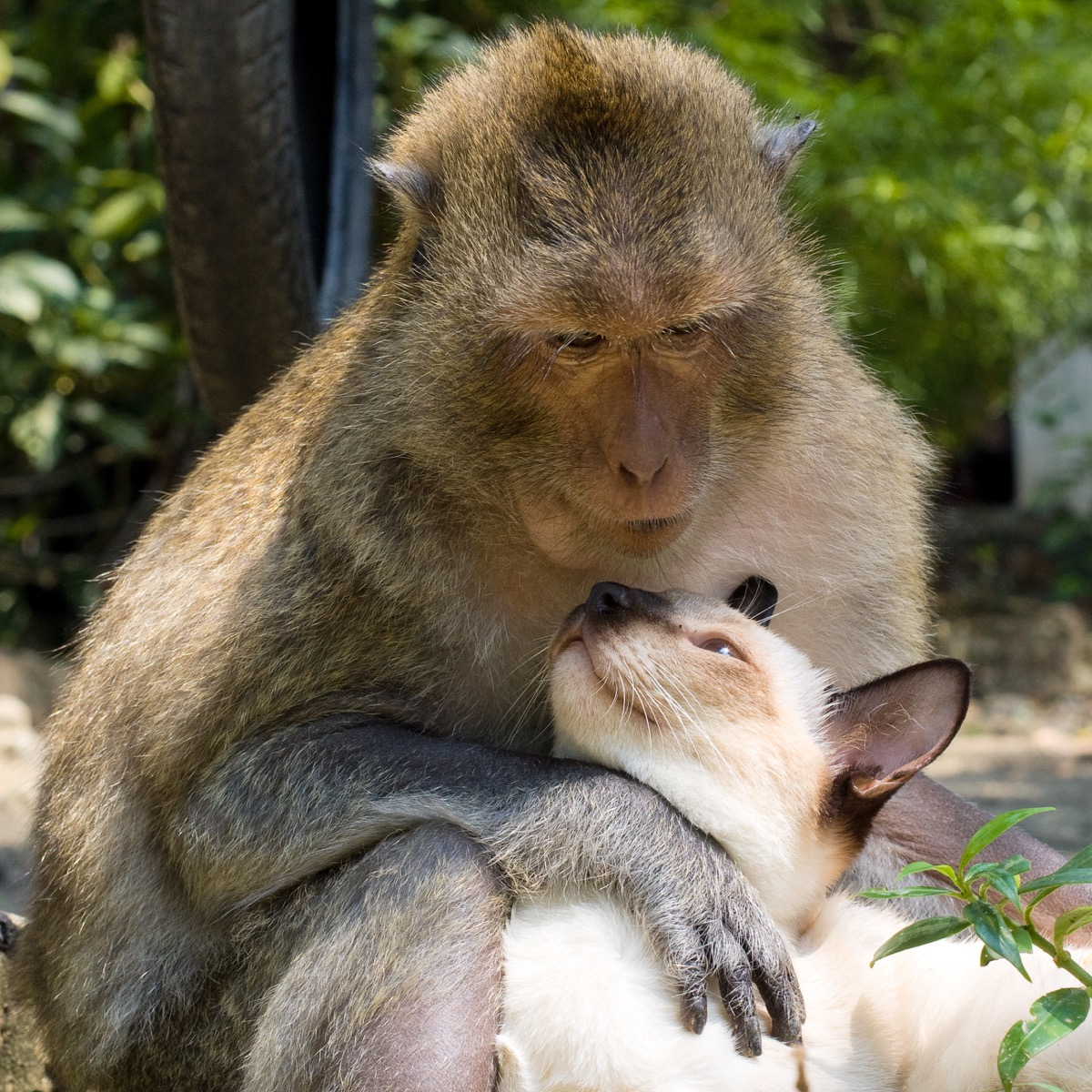 monkey and cat in love animals in love