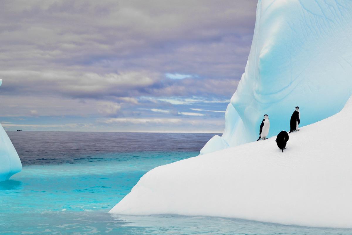 Penguins on iceberg in Antarctica