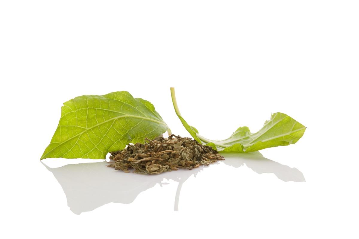 Salvia Leaves Most Abused OTC Medications