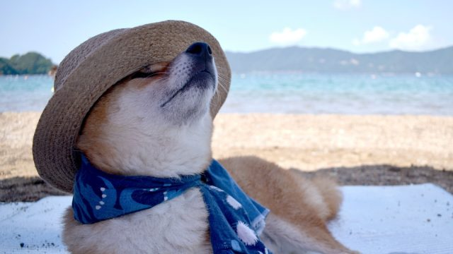 a shiba inu wearing a scarf and a straw hat while relaxing on the beach