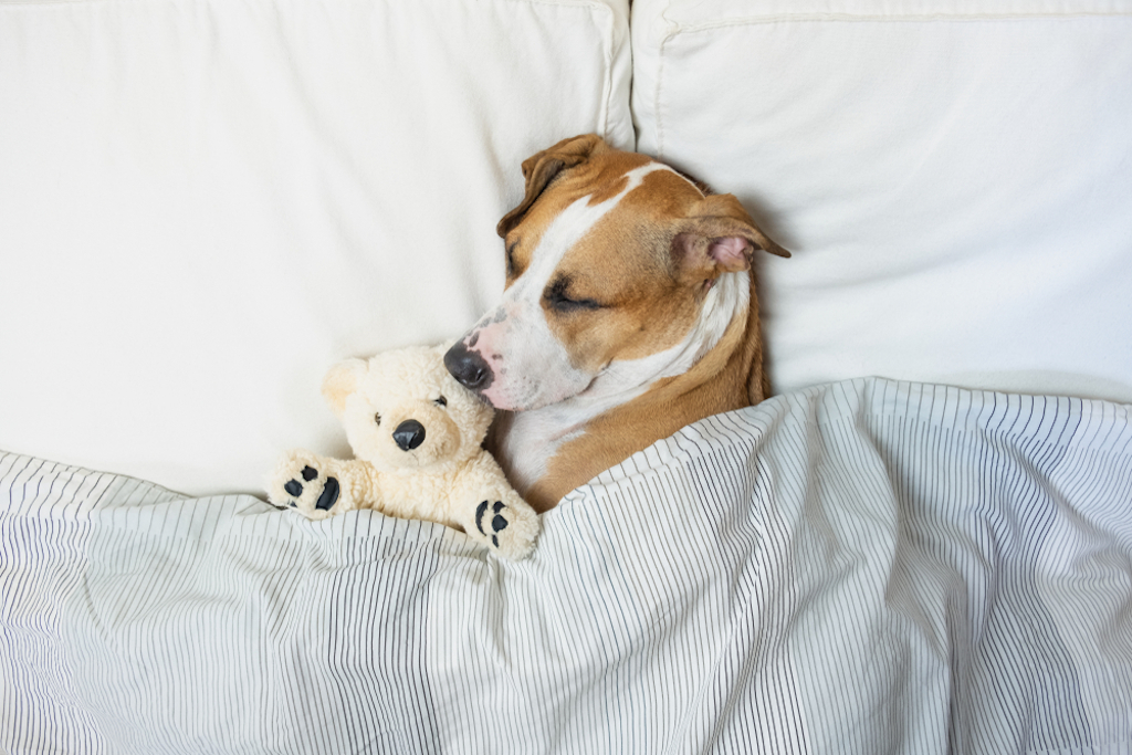 dog sleeping things you never knew dogs could do