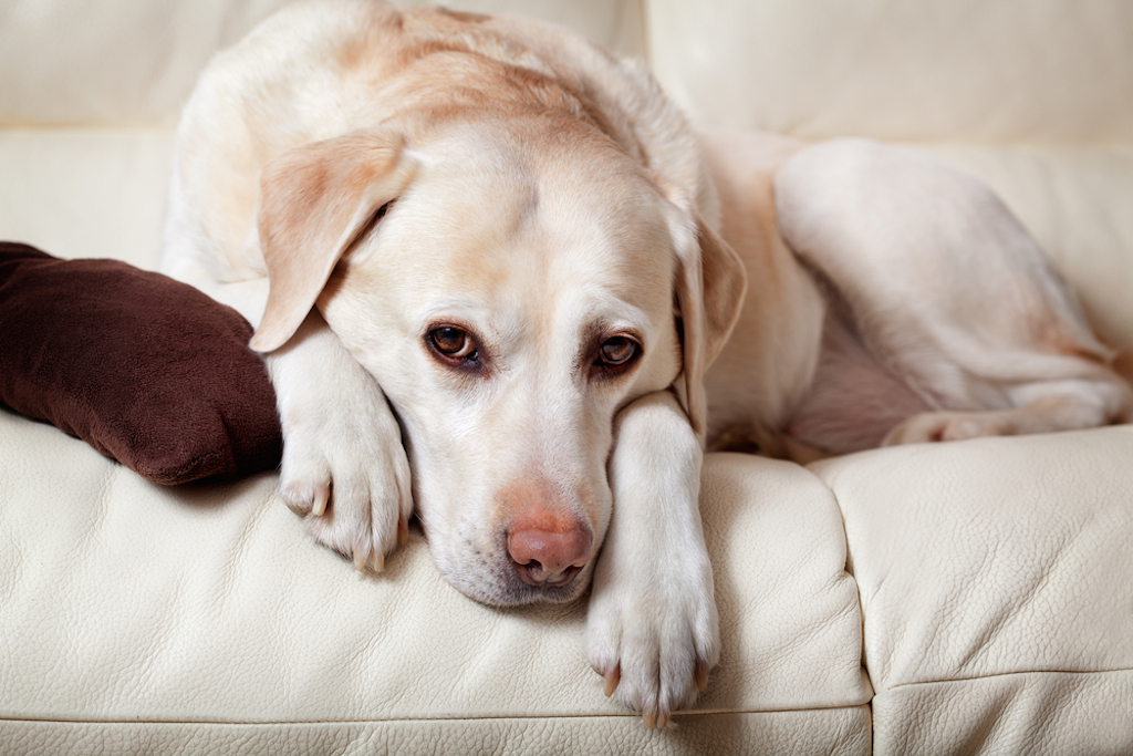 sad dog, things housekeepers hate