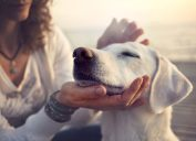 dog feels a shift in the atmosphere with his excellent sense of smell as owner pets him.
