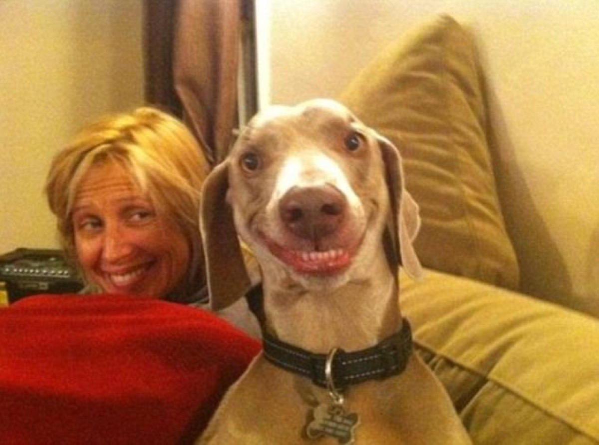 woman and dog smiling dogs who look like their owners