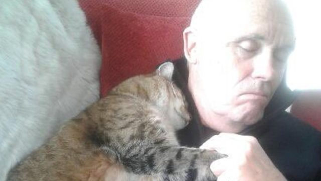 Andrew Falloon viral cat tweet
