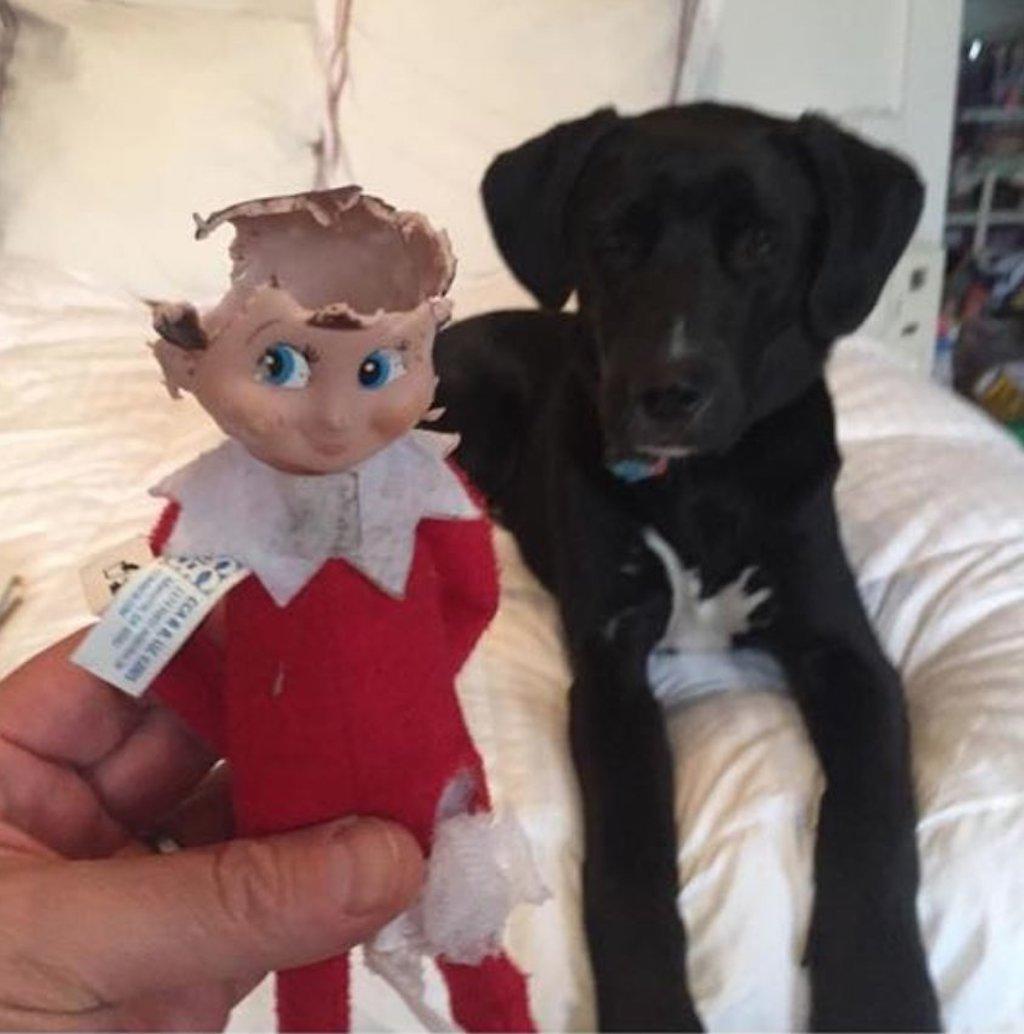 dog versus elf on the shelf