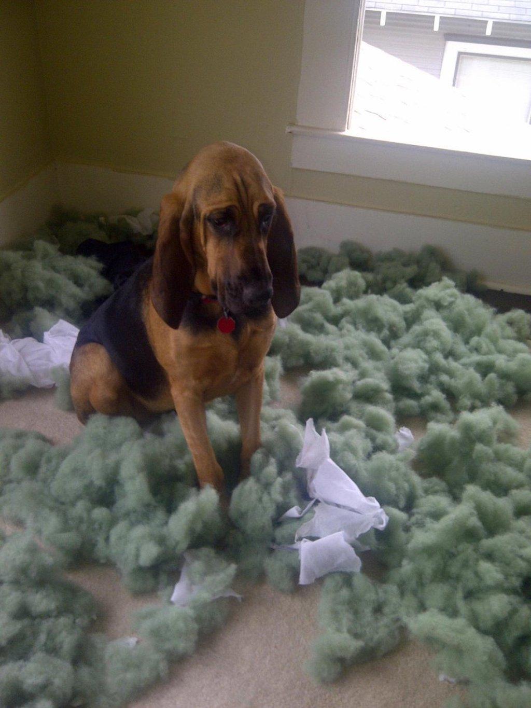 dog versus dog beds
