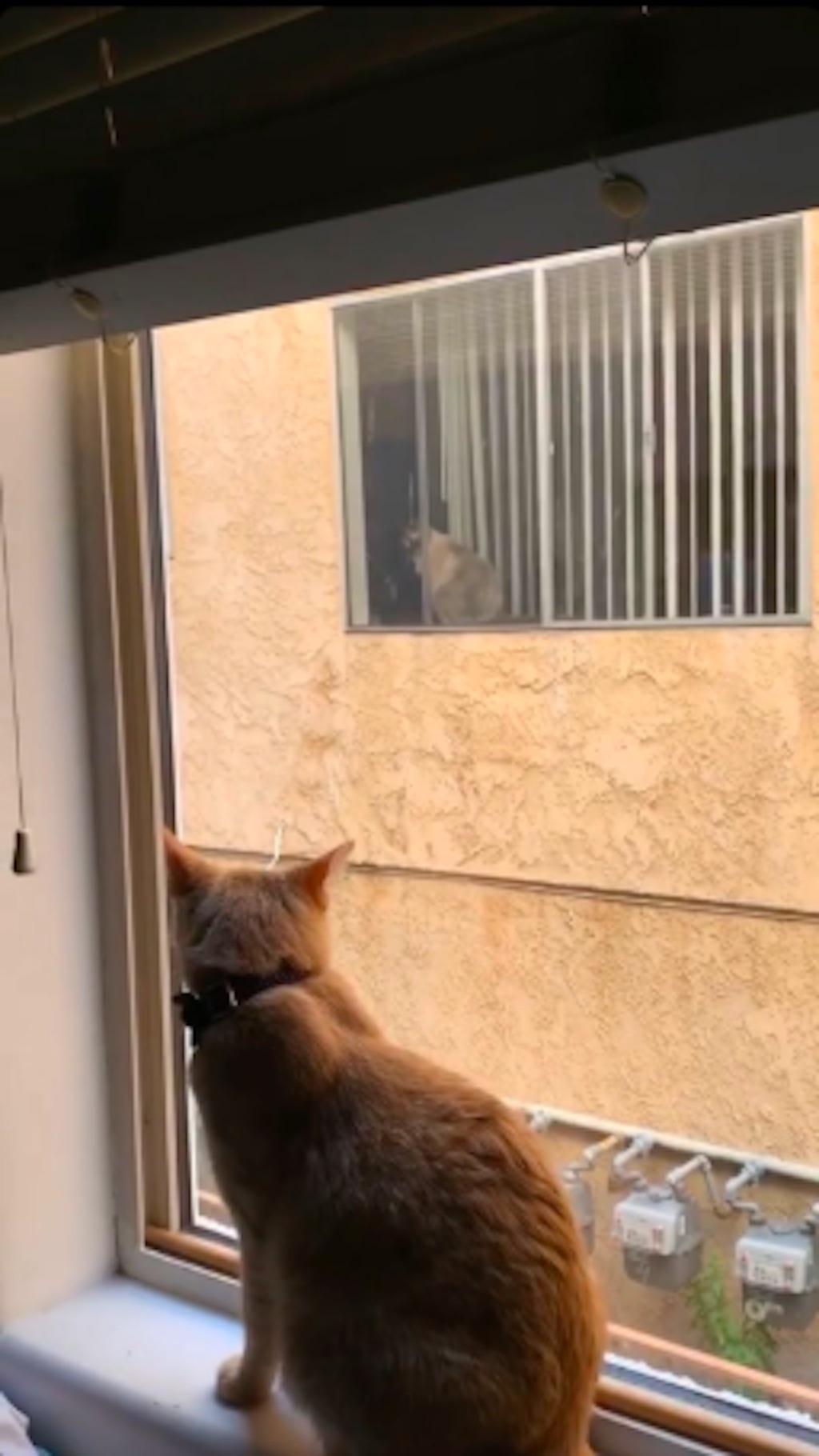 simon cat in love with neighbor