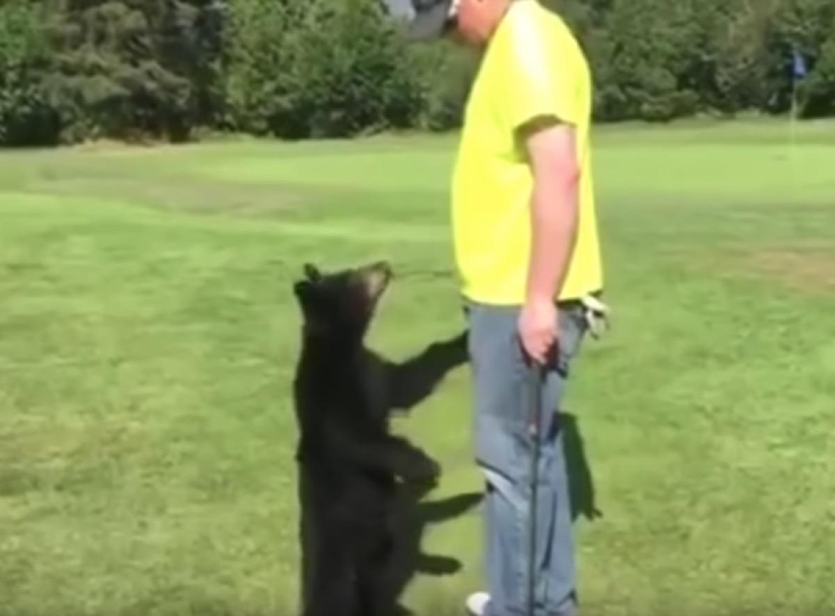 bear cub tries to give golfer a hug adorable photos of bears