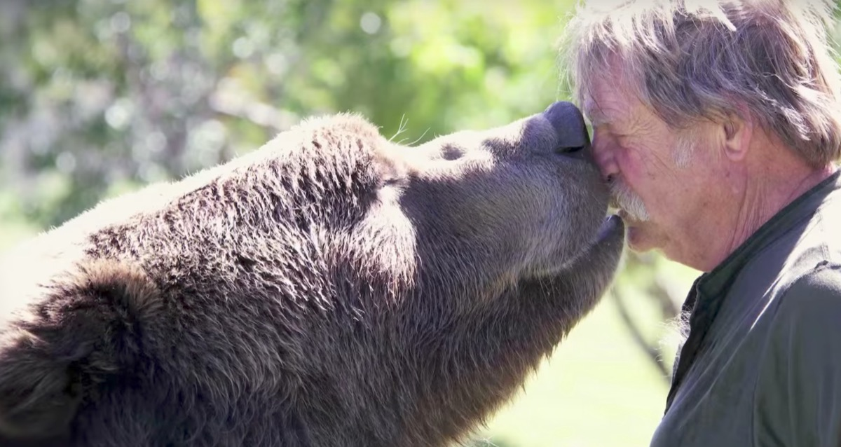 grizzlybear kissing his owner adorable photos of bears