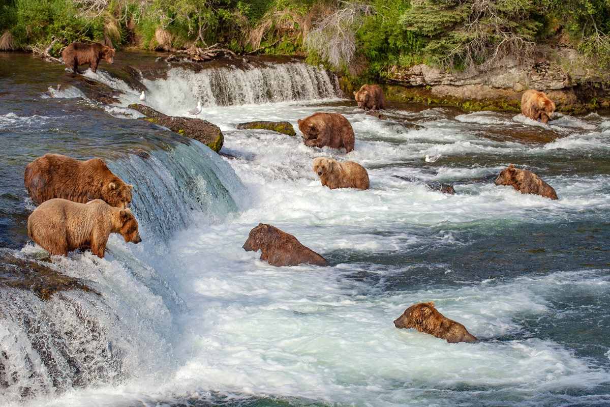 bears in brooks falls, alaska, iconic state photos
