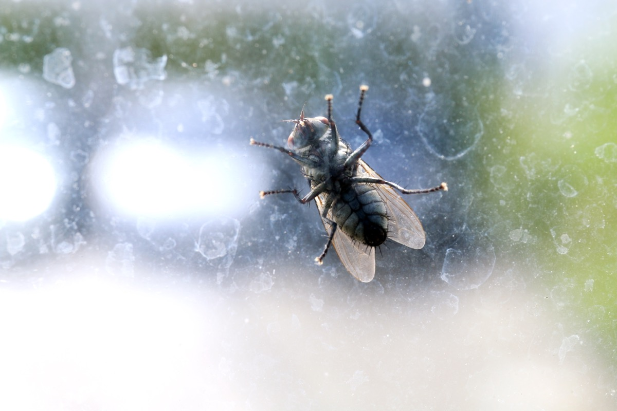 fly on car windshield, wd40 uses